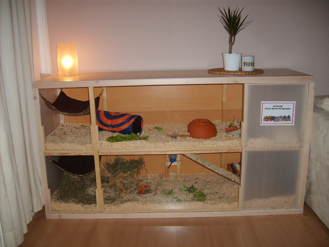 meerschweinchen in not druckvorschau eigenbau umbau tips gesucht ergebnisse seite 1. Black Bedroom Furniture Sets. Home Design Ideas